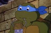Teknőc teknőc mindenütt